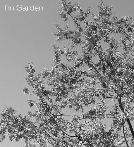 枯れ木3.jpg