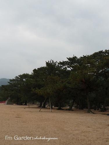 砂浜と.jpg