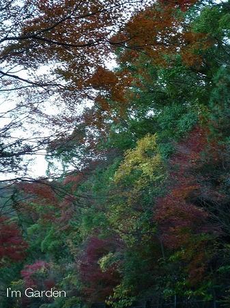 紅葉狩り2.jpg