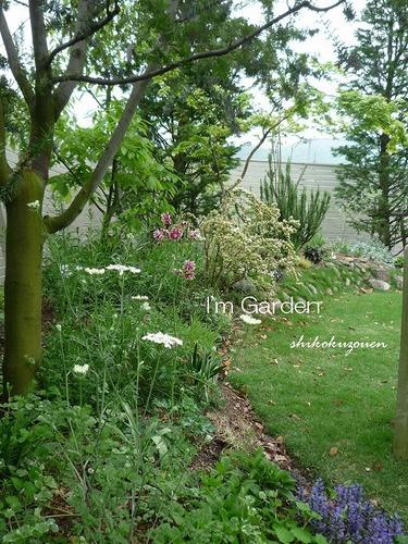 芽吹きの庭.jpg